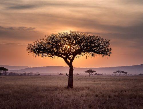 """Interview im Magazin """"African"""": Gemeinsam für Afrika"""